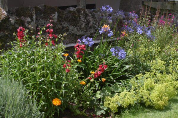 Flower borders in bloom